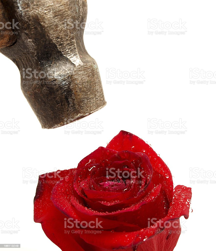 Rose and hammer royalty-free stock photo