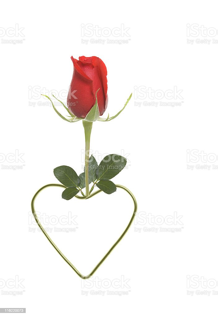 Rose and Heart royalty-free stock photo