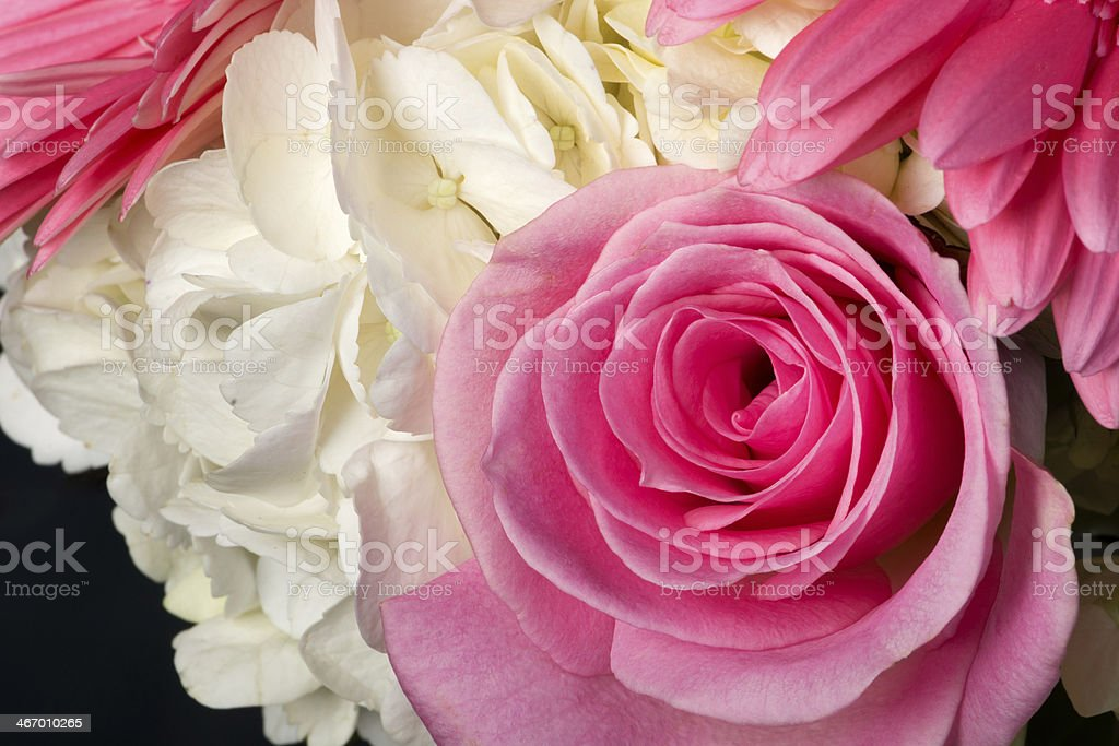 Rose and hydrangea bouquet in studio. royalty-free stock photo