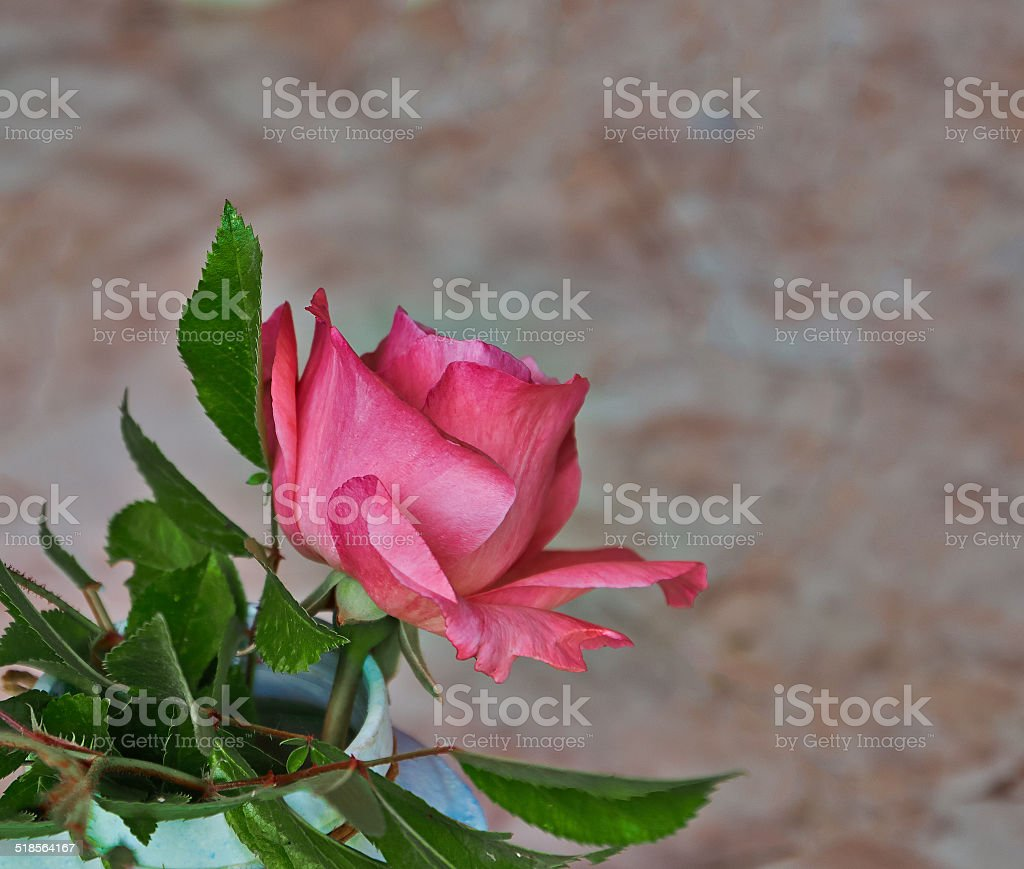 rose and marble royalty-free stock photo