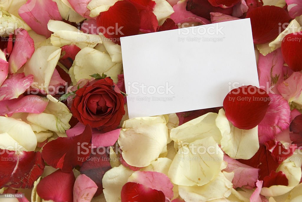 Rose and notecard royalty-free stock photo