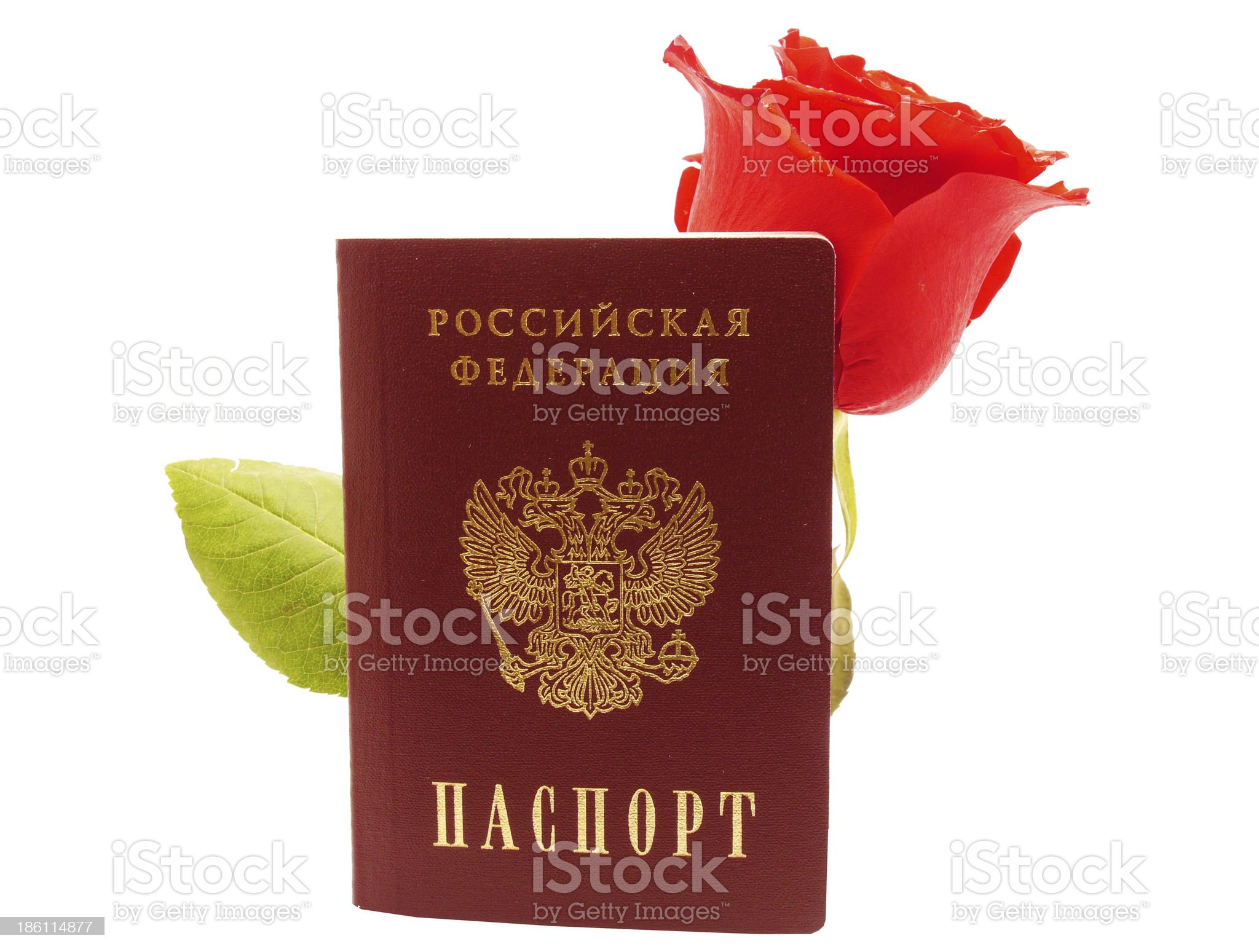 Rose and passport on white background royalty-free stock photo