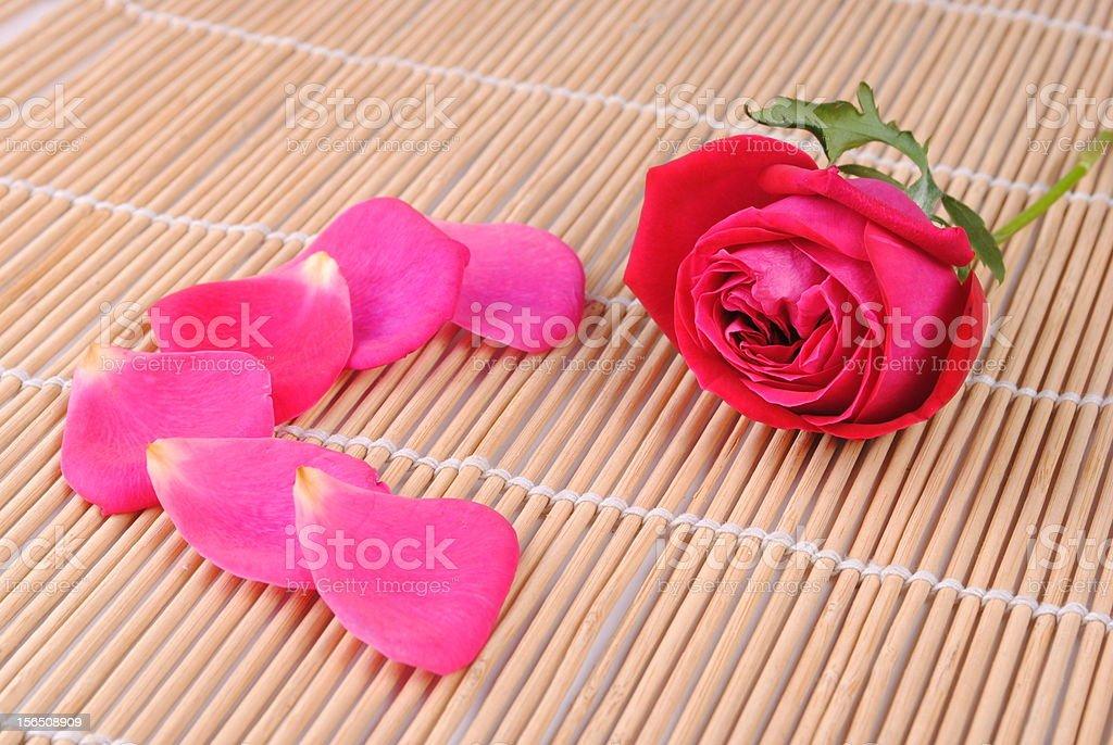 rose and petals royalty-free stock photo