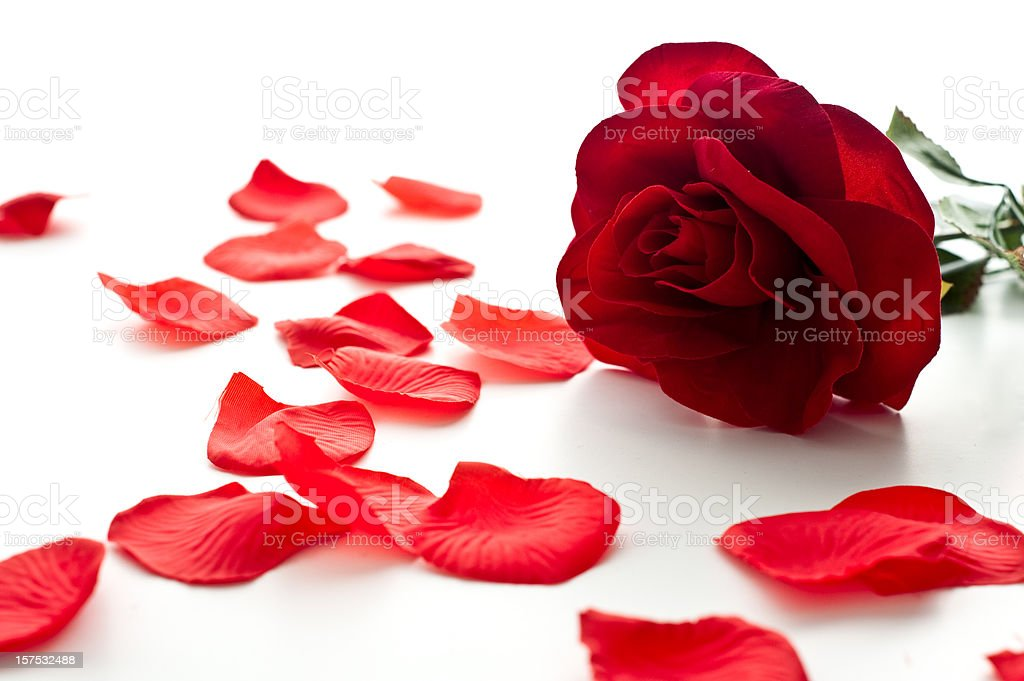 Rose and Petals stock photo
