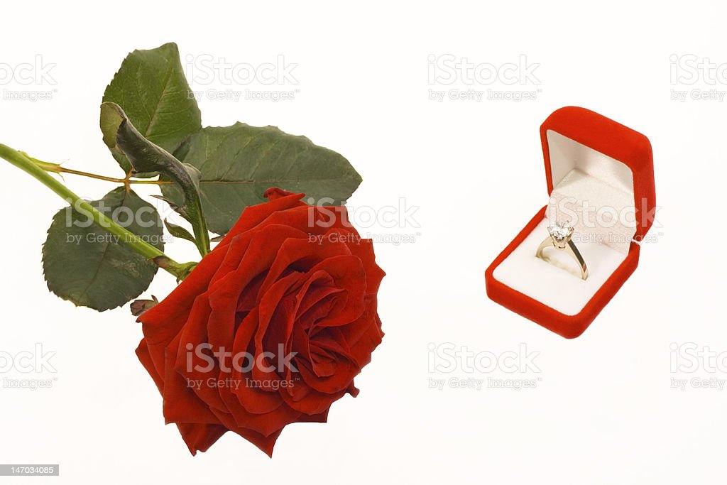rose and ring royalty-free stock photo