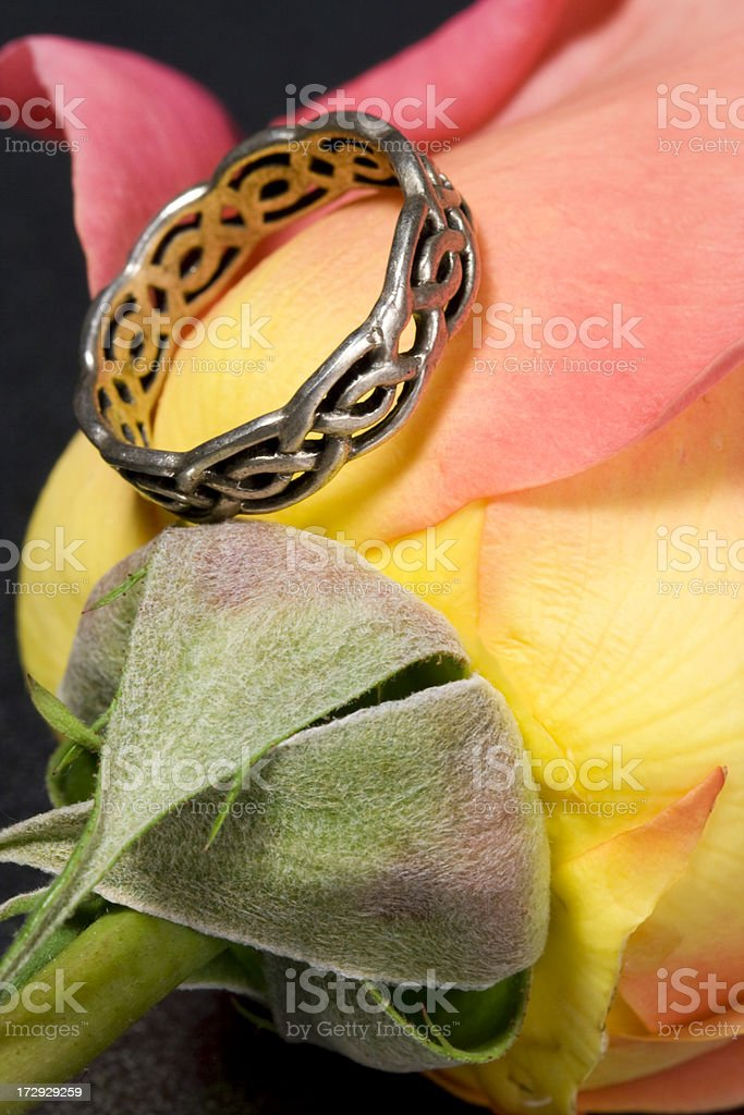 Rose and ring stock photo