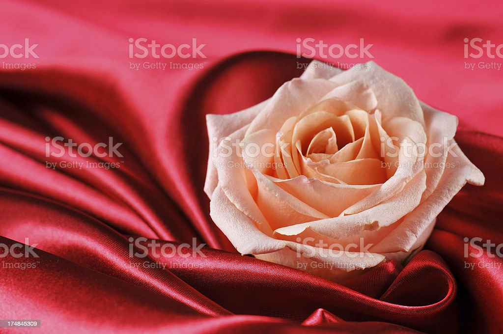 Rose and silk royalty-free stock photo
