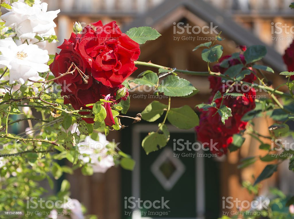 Rose Arch Entrance royalty-free stock photo