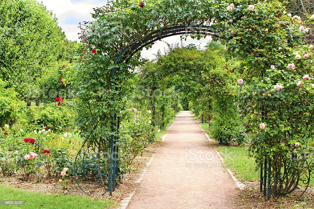 Rose arches stock photo