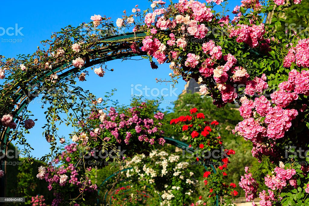 Rose archway in the Parisian garden stock photo