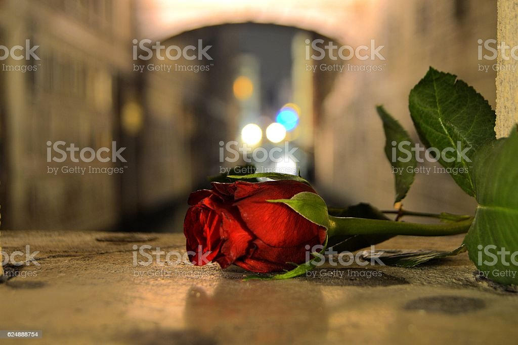 Rose at night in Venice, Italy stock photo