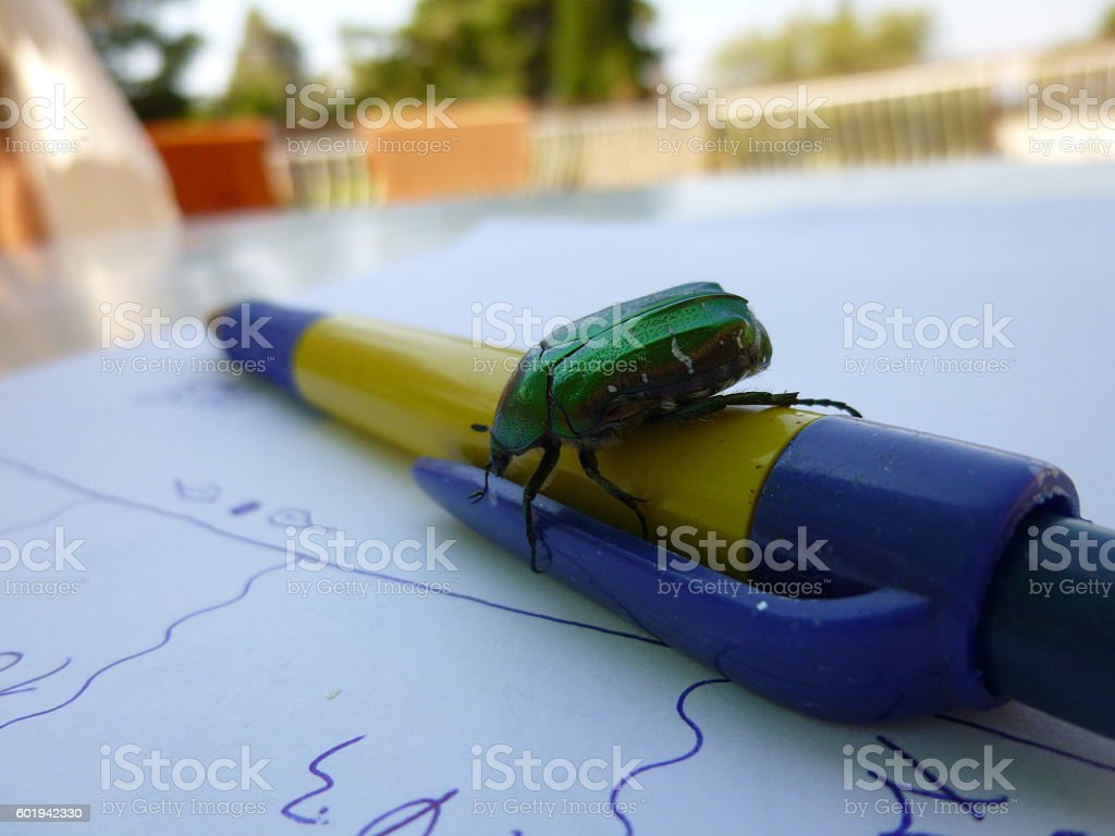 Rose beetle on ball pen and white paper with writings stock photo