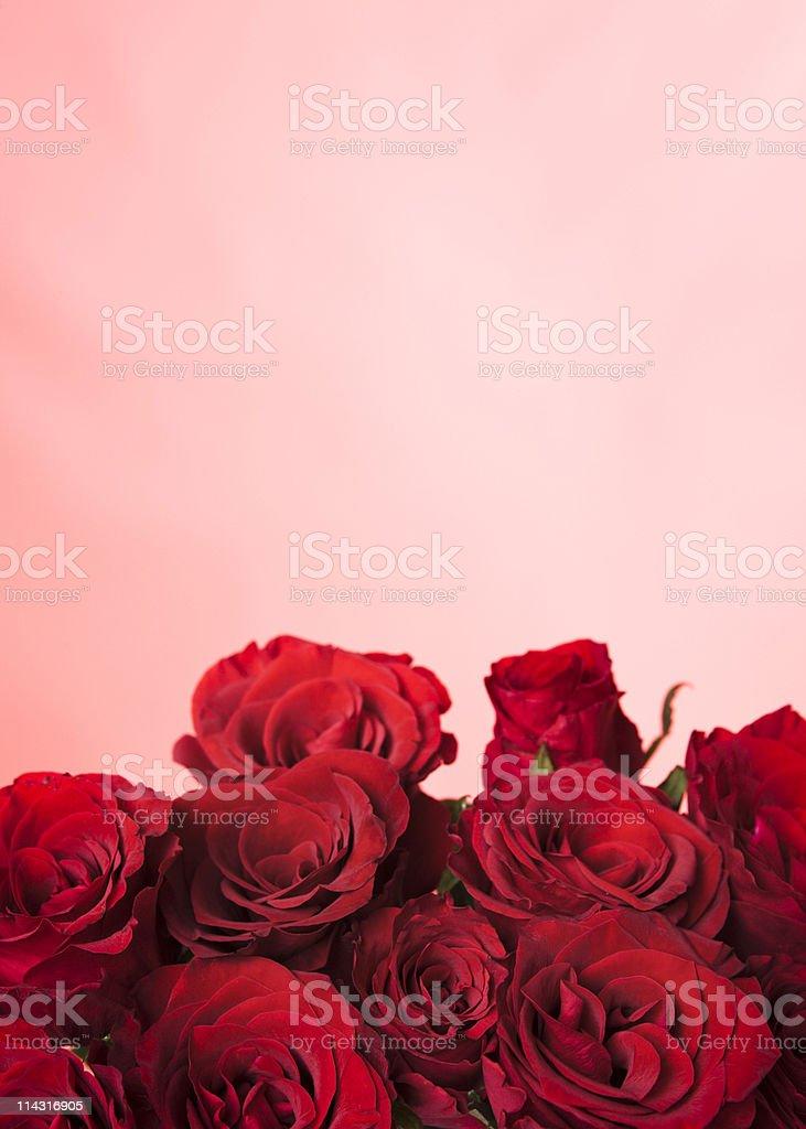 Rose border stock photo