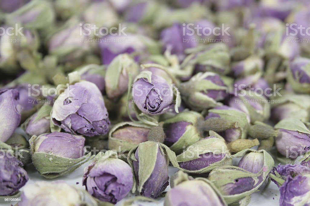 rose buds royalty-free stock photo