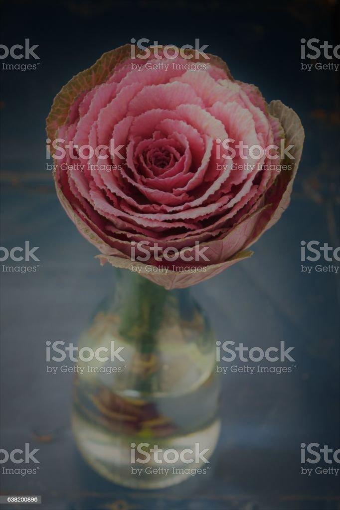 Rose cabbage in glass vase stock photo