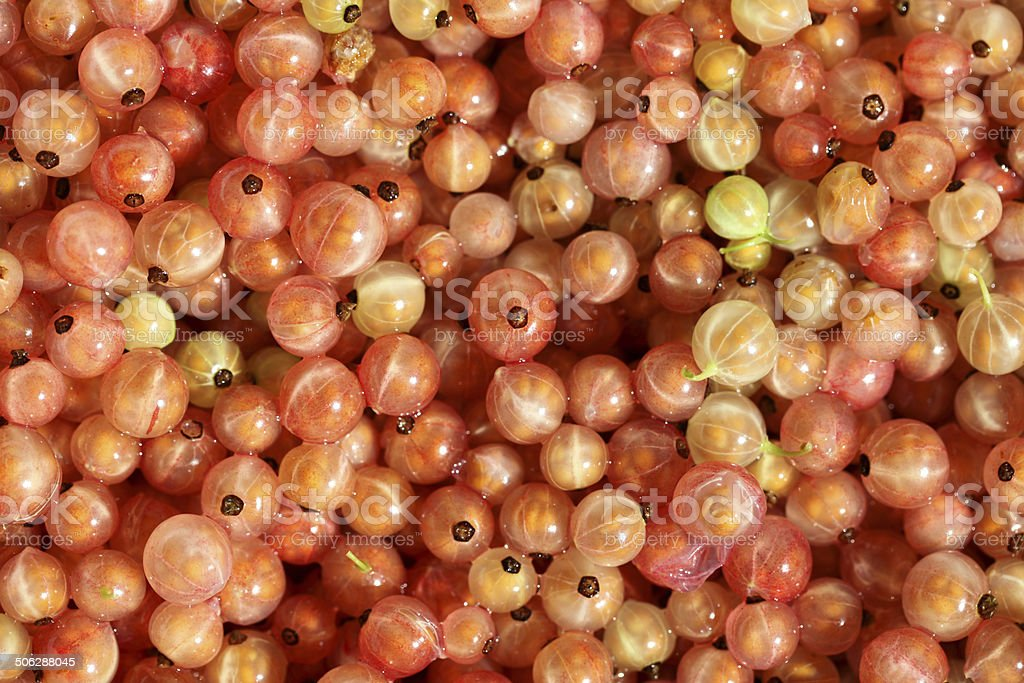 Rose Currants stock photo