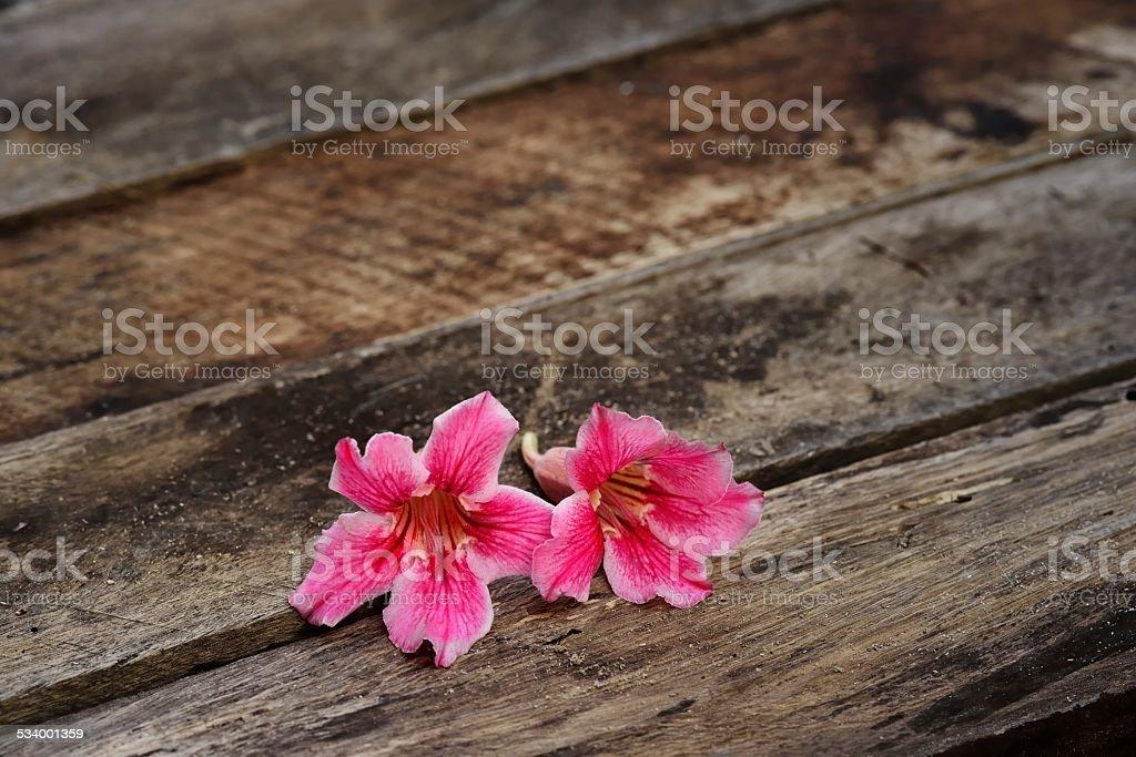 Rose desert on wooden balckground stock photo
