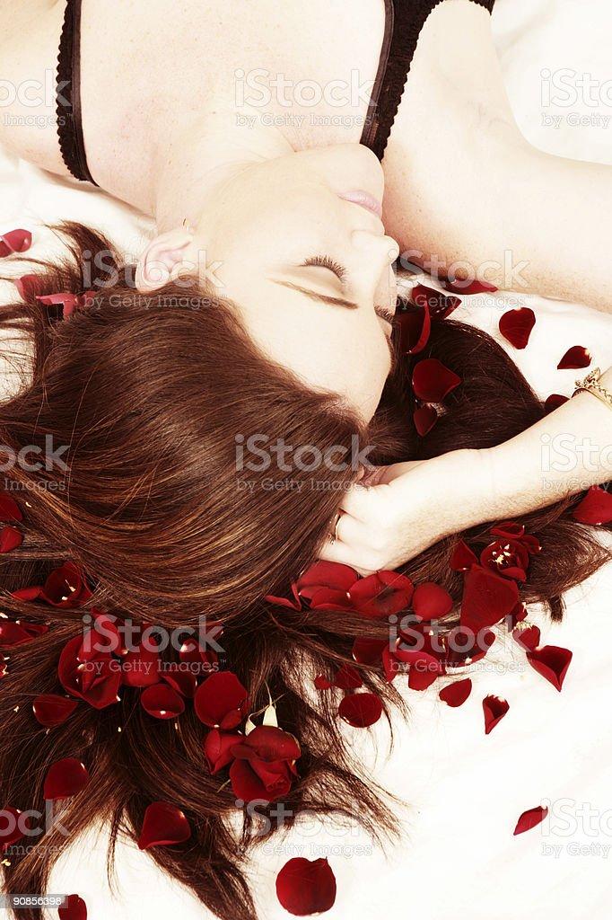 Rose Dreams stock photo