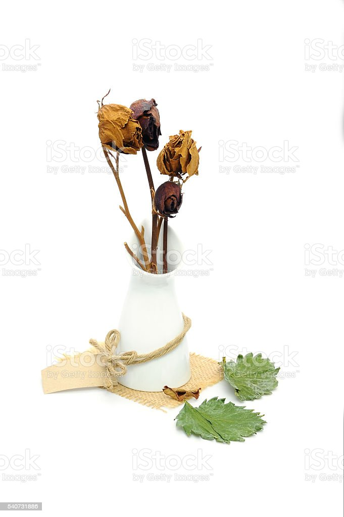 rose dried in vase on white background stock photo