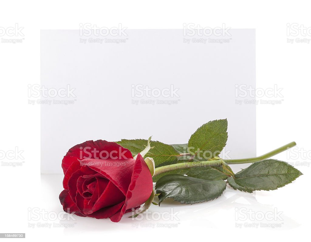 Rose flower and empty card royalty-free stock photo