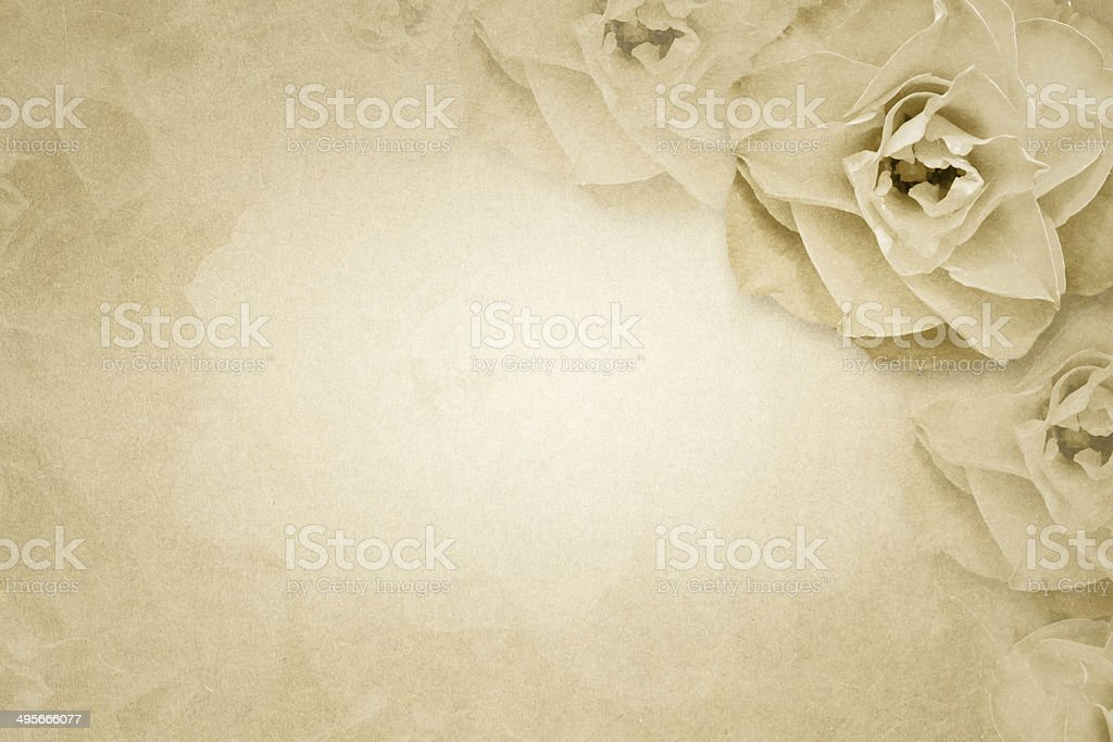 Rose flower on paper background stock photo