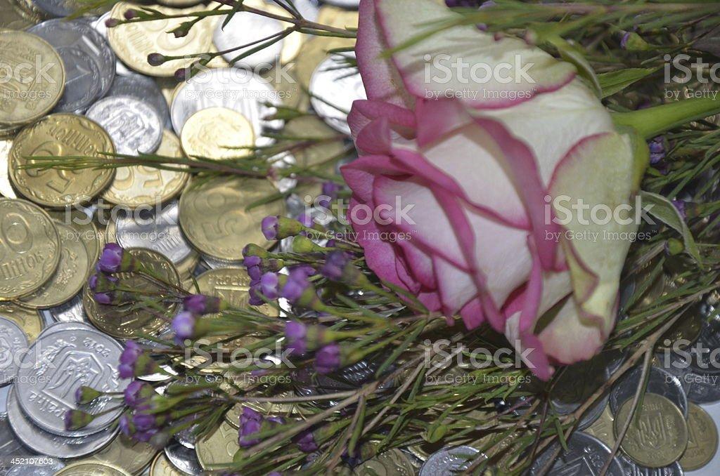 Rose flower on the money stock photo