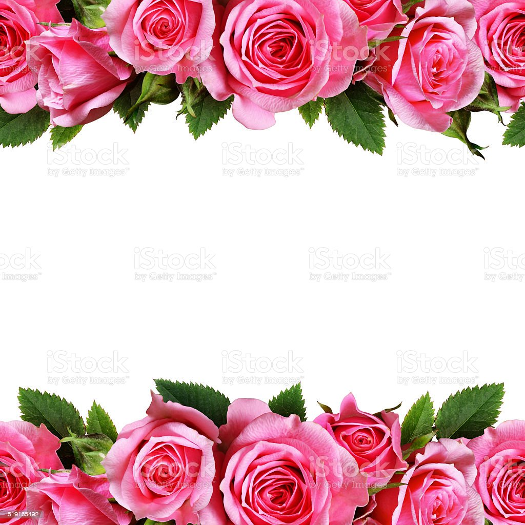 Rose flowers dorders stock photo