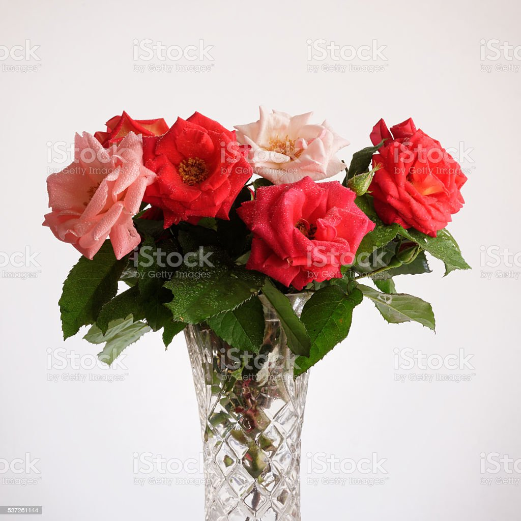 Rose flowers in the vase stock photo
