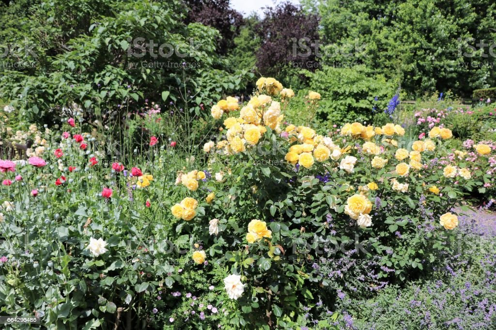 Rose Garden in Hyde Park London, United Kingdom stock photo