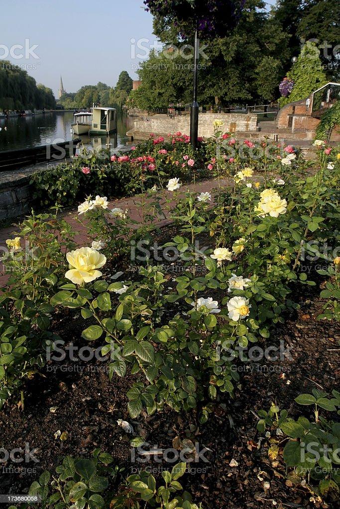 Rose Garden in Stratford Upon Avon royalty-free stock photo