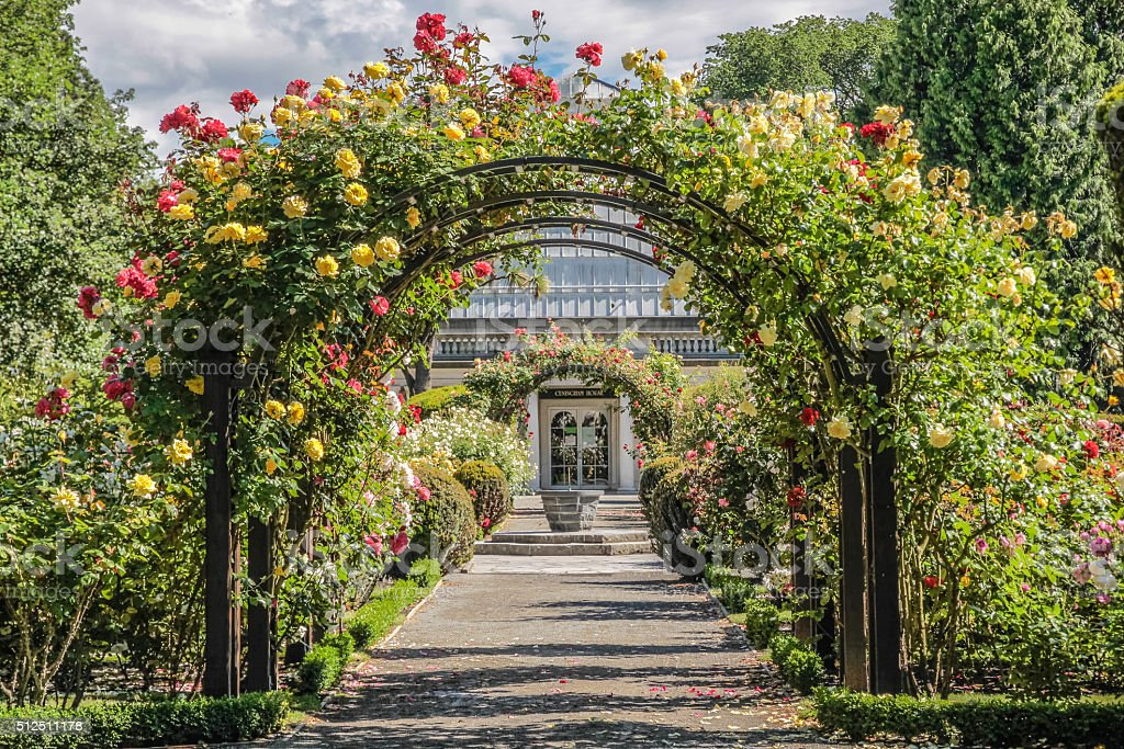 Rose garden in the Botanic Gardens stock photo