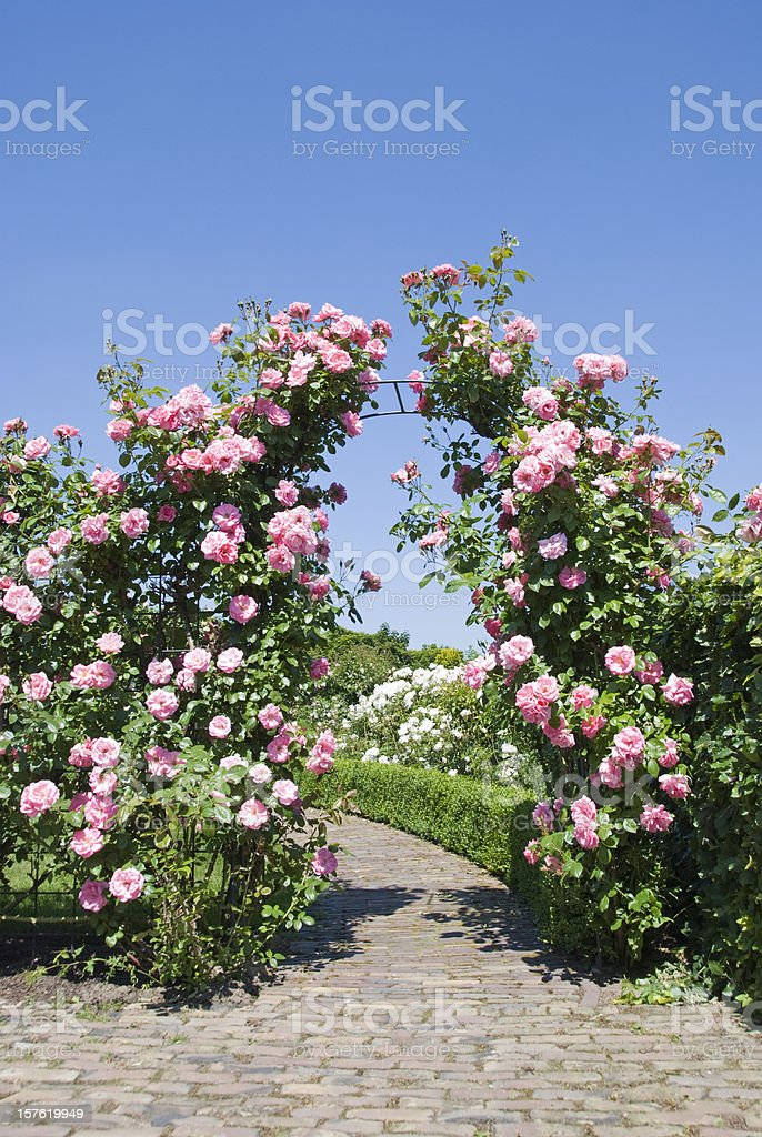 Rose Garden with blooming gate stock photo