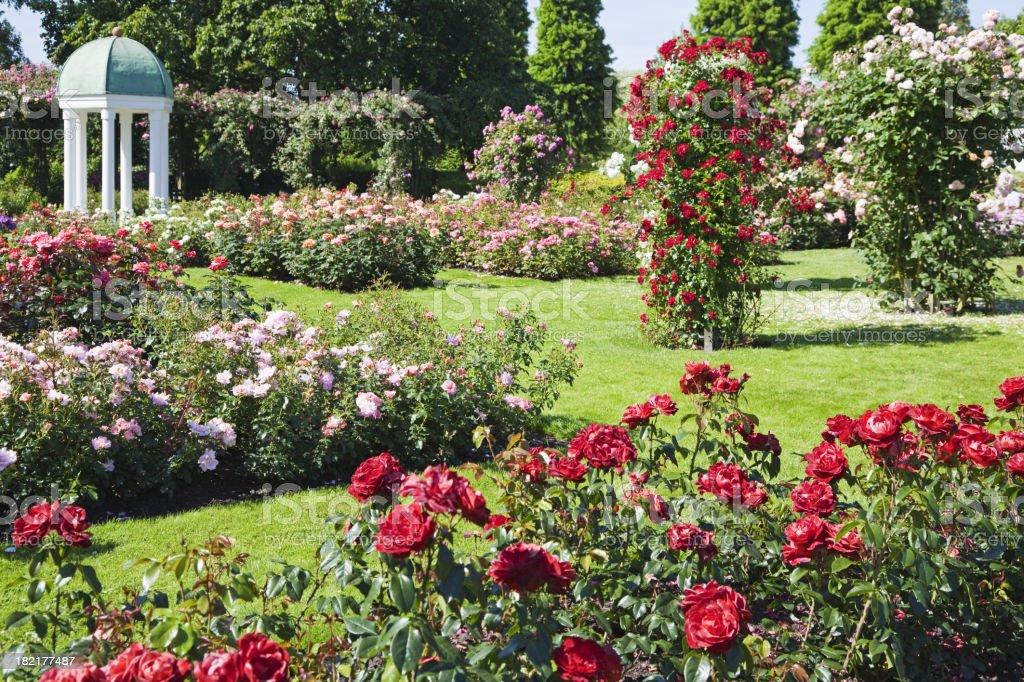 Rose garden # 6 XXXL stock photo