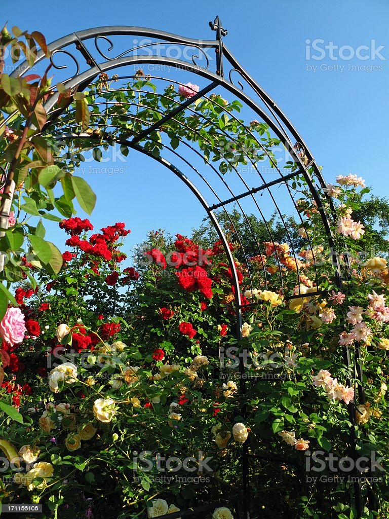Rose Gate stock photo