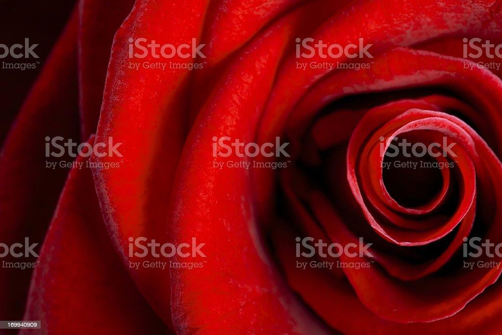 Rose Heart stock photo