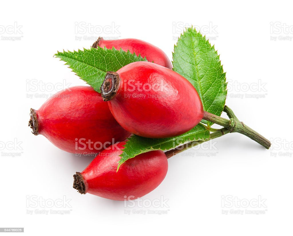 Rose hip isolated on a white background. stock photo