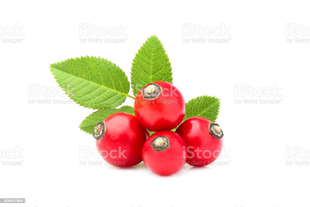 Rose hip with leaves isolated. stock photo