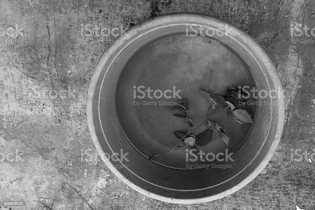 Rose in a bowl with water in black and white stock photo
