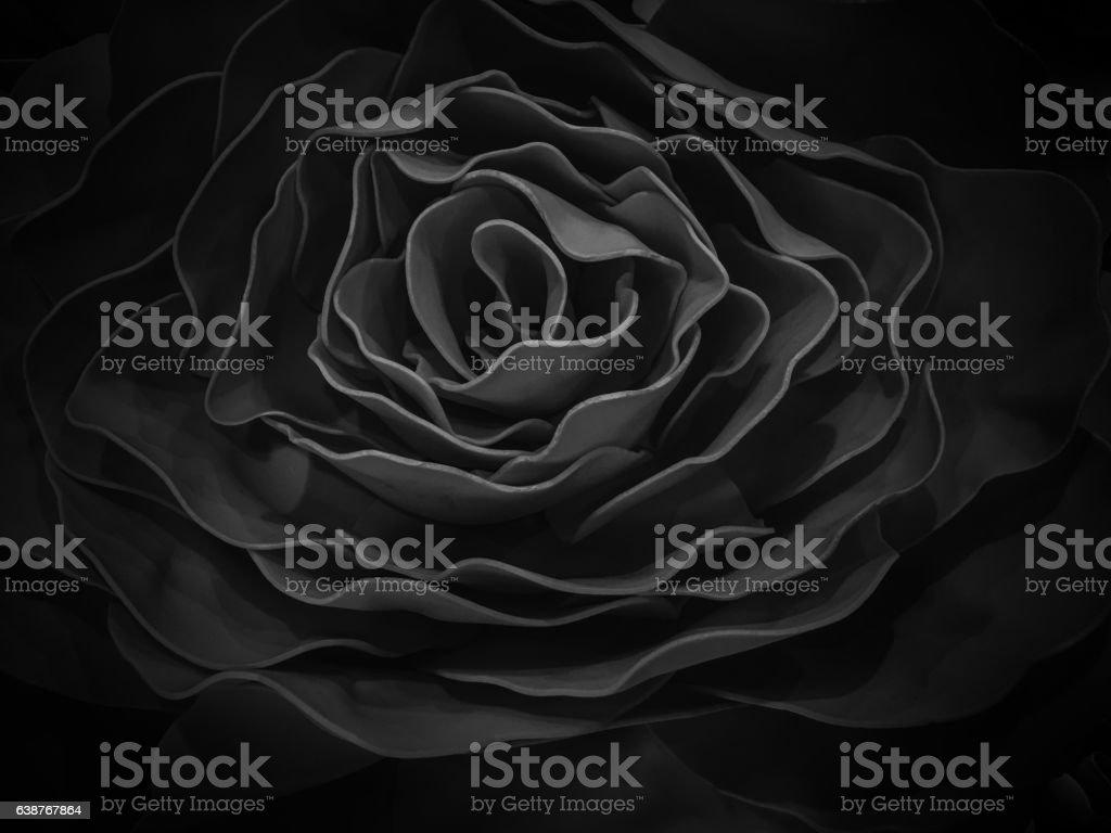 rose in black stock photo