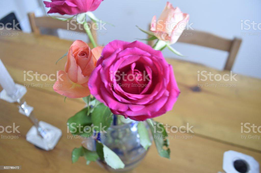 Rose in Bloom stock photo