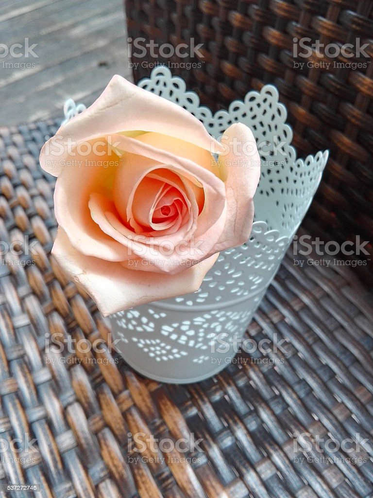 Rose in pot stock photo