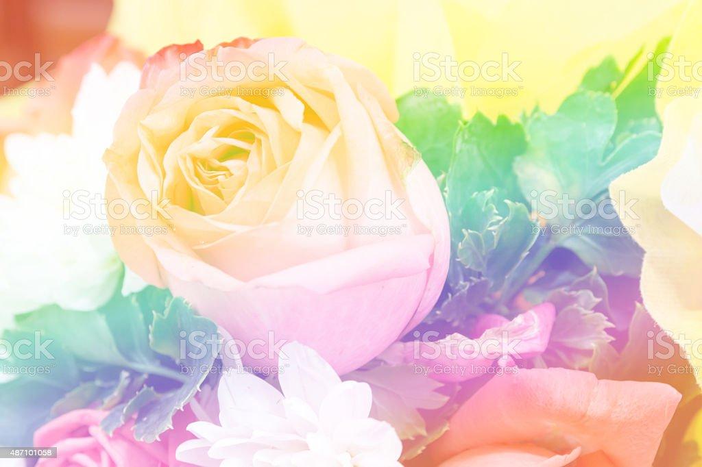 Rose in Rainbow Tone stock photo