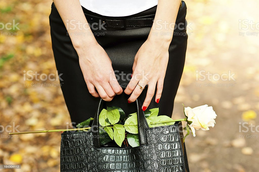 rose in the bag royalty-free stock photo