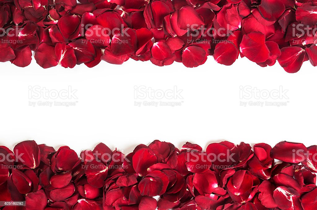 Rose leaves isolated stock photo