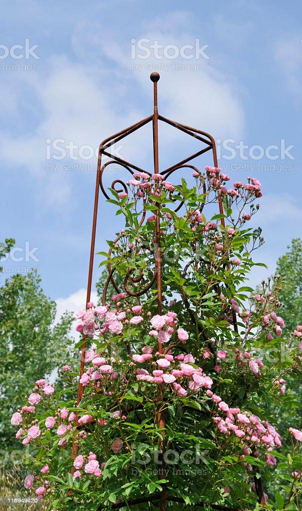 Rose  obelisk stock photo