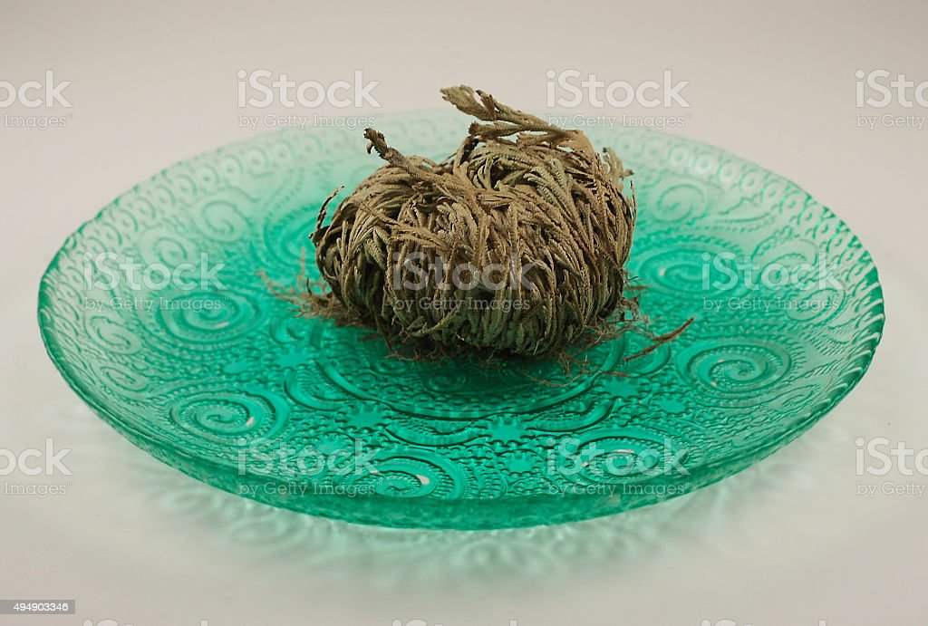 Rose of Jericho stock photo