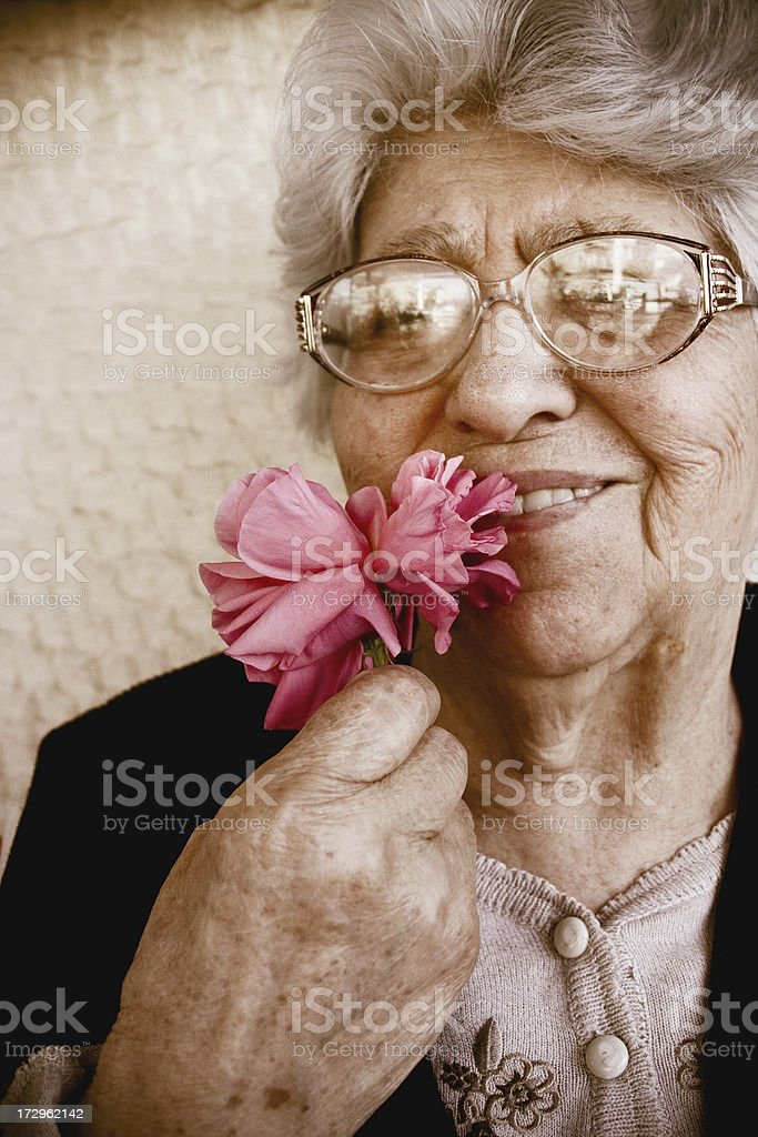 Rose of life stock photo