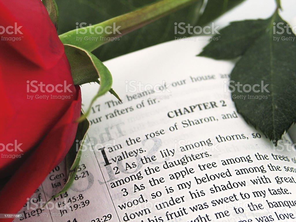 Rose of Sharon (KJV) stock photo