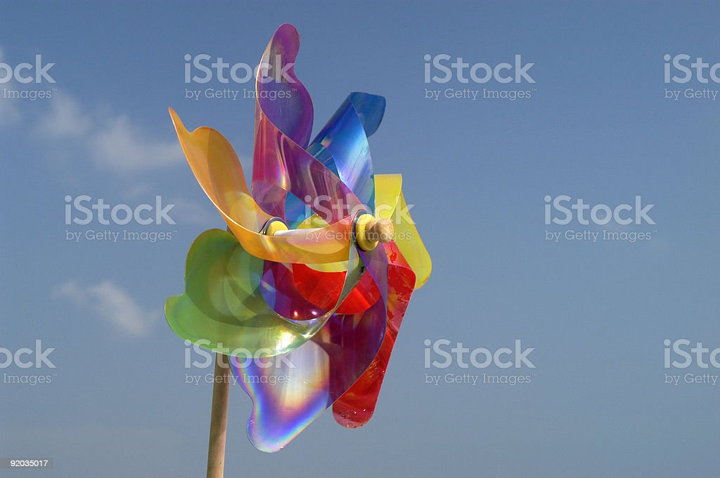 rose of wind royalty-free stock photo