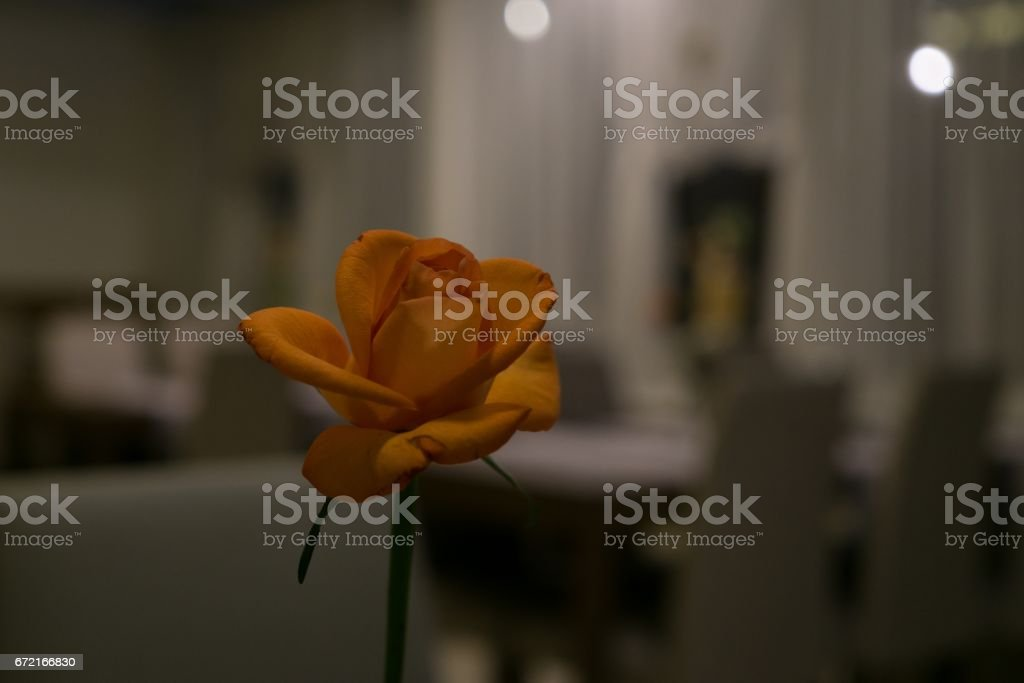 Rose on a table stock photo